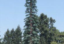 برج اتصالات صديق للبيئة