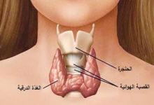 Photo of 7 طرق لـ علاج امراض الغدة الدرقية بالأعشاب